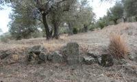 pietra-miliare-negli-ulivi.jpg